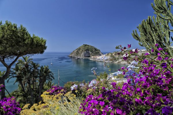 A view of SantAngelo in Ischia island in Italy through bougainvillea glabra
